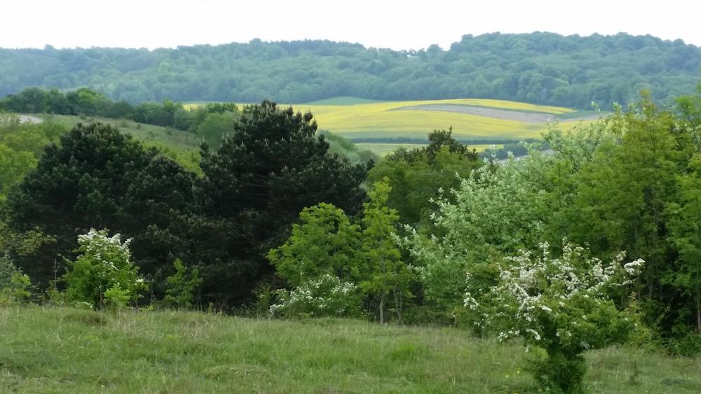 farm landscape (2)