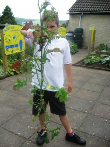a giant weed removed from the vegetable garden at Danby C of E School